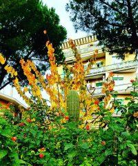 Il giardino tropicale a via dei noci